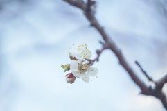 Blomningfilial Royaltyfria Bilder