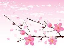 blomningfilialCherry royaltyfri fotografi