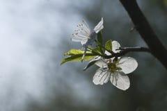 blomningfjäder Fotografering för Bildbyråer