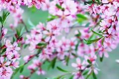 blomningfjäder Royaltyfria Bilder