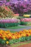 blomningfjäder Arkivfoto