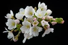blomningfjäder Arkivbild