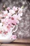blomningfjäder Royaltyfri Bild