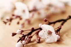 blomningfjäder Royaltyfri Foto