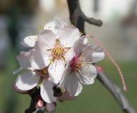 blomningfjäder Arkivfoton