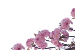 blomningfjäder royaltyfri fotografi