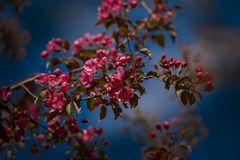 Blomningfruktträd Royaltyfri Fotografi