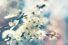 Blomningfruktträd, härlig natur i vår arkivbilder