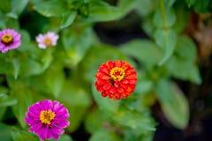 Blomninggräsplanen av trädgården efter regnet i sommaren Inlagda växter på gatan royaltyfri fotografi