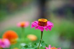Blomninggräsplanen av trädgården efter regnet i sommaren Inlagda växter på gatan fotografering för bildbyråer
