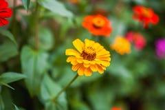 Blomninggräsplanen av trädgården efter regnet i sommaren Inlagda växter på gatan arkivfoton
