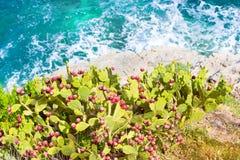 Blomningkaktus som växer på havskust Bali Kreta Royaltyfria Foton