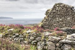 Blomningljung på kyrka fördärvar, Irland Arkivbild