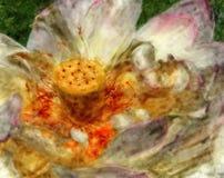 blomninglotusblomma Royaltyfri Fotografi