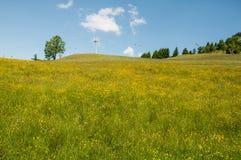 Blomningmaskrosäng i Österrike arkivfoto