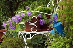 Blomningpetunia med blåa blommor Arkivfoto