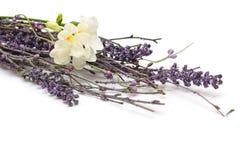 blomningprovence stil Royaltyfria Bilder
