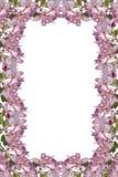 blomningram Royaltyfri Fotografi