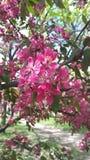 Blomningsäsong Royaltyfria Bilder