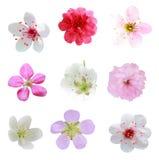 Blomningsamling royaltyfri bild