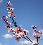 blomningspringtime Arkivbilder