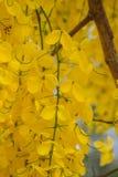 Blomningtider royaltyfria bilder