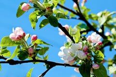 Blomningträd över naturbakgrund Arkivfoto
