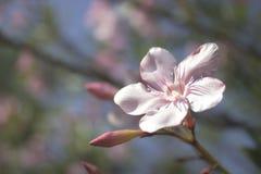 Blomningträd över naturbakgrund Royaltyfria Foton