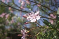 Blomningträd över naturbakgrund Arkivfoton