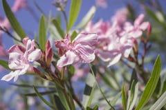 Blomningträd över naturbakgrund Arkivbild