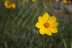 Blomningträd över naturbakgrund Fotografering för Bildbyråer