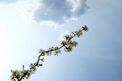 Blomningträd Royaltyfria Foton