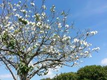 Blomningträd Royaltyfri Fotografi