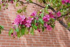 Blomningträd Fotografering för Bildbyråer