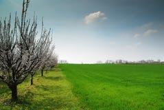 Blomningträd i äng Fotografering för Bildbyråer