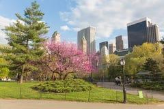 Blomningträd i Central Park, NYC Arkivbilder