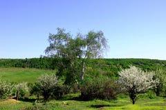Blomningträd i den övergav trädgården Royaltyfria Bilder