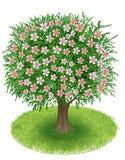 Blomningträd i grönt fält Arkivbild