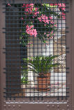 Blomningträd och blomkrukan bak stänger Royaltyfri Fotografi