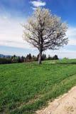 blomningträd på äng med att fotvandra och att cykla slingafläckar Royaltyfri Fotografi