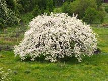 Blomningträd på ängen, blomningfruktträd över naturbakgrund royaltyfri bild
