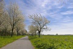 blomningväg arkivfoton