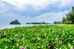 Blomningväxt i kusten Arkivbilder