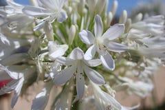 Blomningväxt, makrophotoggraphy, Fotografering för Bildbyråer