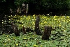 Blomningvåtmarker på utkanten av Prague Royaltyfria Bilder