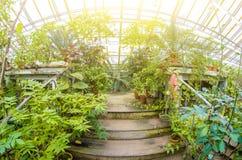 Blomningvrieseaväxter i busksnår av den tropiska fuktiga skogen Arkivfoto