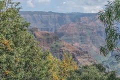 BlomningWaimea kanjon Arkivfoto