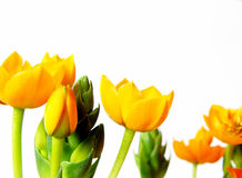 blomningyellow royaltyfri fotografi