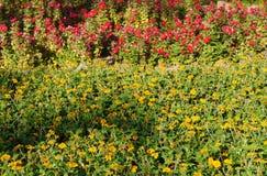 Blomrabatt med frodiga blommor Royaltyfria Foton