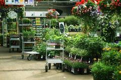 blomsterhandel Royaltyfria Bilder